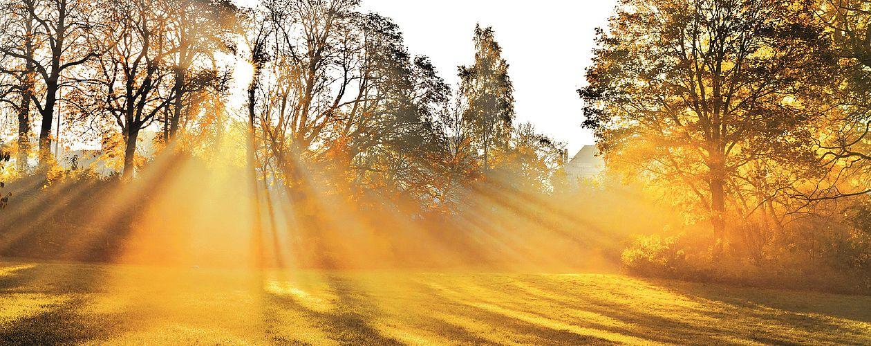 Gelb ist die strahlendste aller Farben – sie symbolisiert Licht, Heiterkeit ebenso wie Erleuchtung und Intellekt.