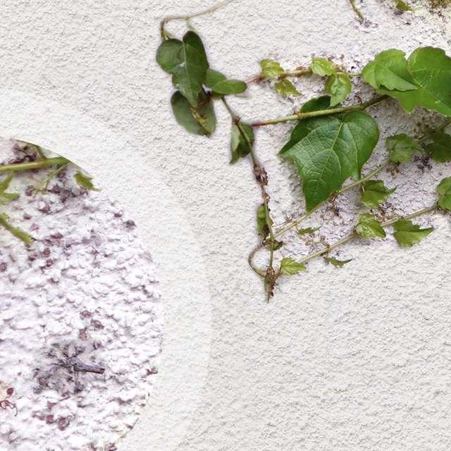 Tipps zum Streichen bewachsener Fassaden - Alpina Farben