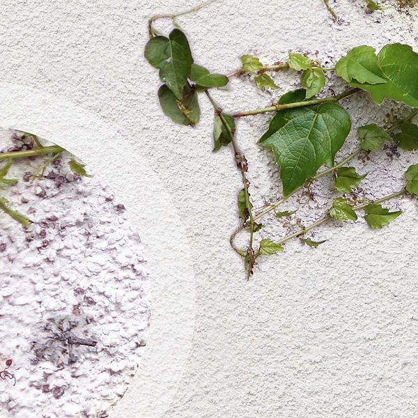Tipps zum Streichen bewachsener Fassaden