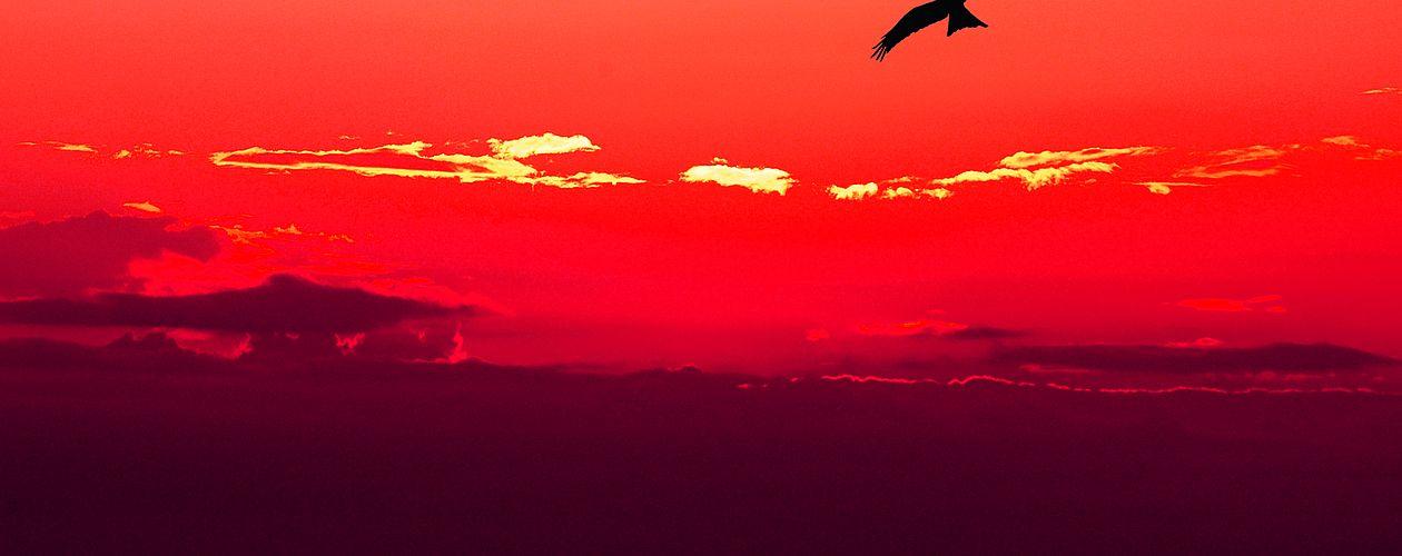 Rot ist die präsenteste und wärmste aller Farben – sie alarmiert und zieht uns zugleich magisch an.